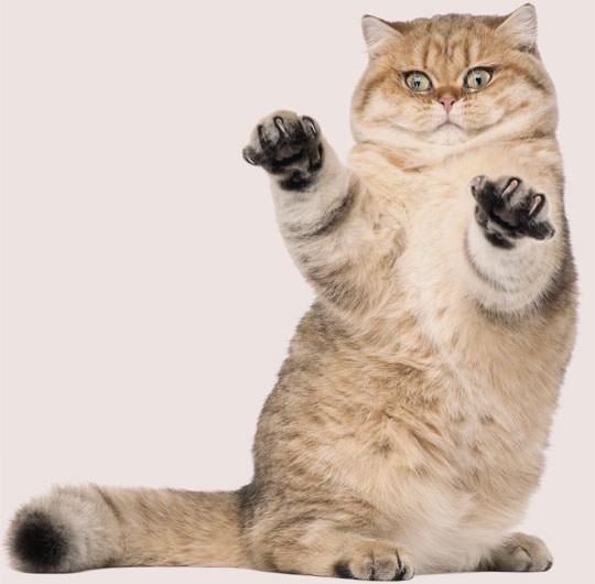 Un gatto ticinese esprime la sua opinione